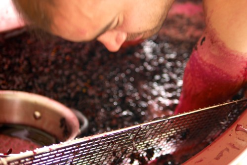 Digging seeds up from the bottom of a vat of fermenting wine Vintage 2015 by Paul Kaan