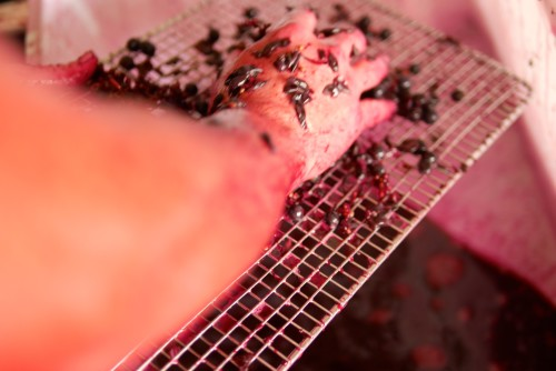 Sieving Grape Seeds Using a Cooling Rack 3 Vintage 2015 by Paul Kaan