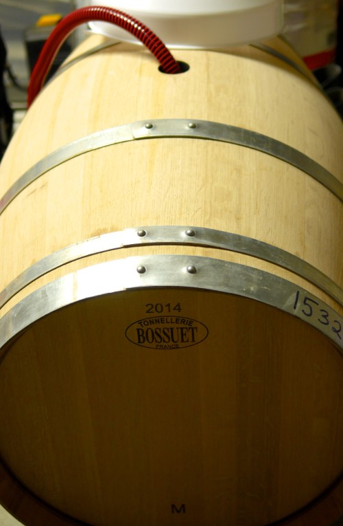 Barrel Ferment Kicking Off in Some New French Oak by Paul Kaan