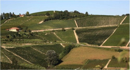 Gaja Vineyards Sori Tildin Costa Rusi Barbaresco Italy